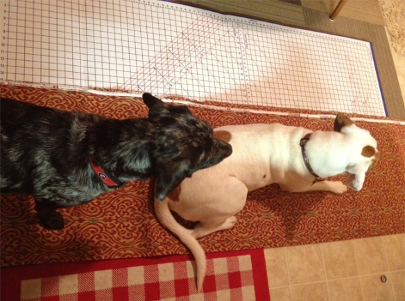 dogmeasurements