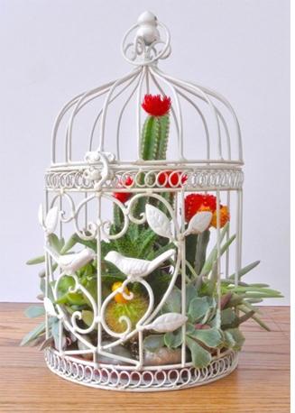 Succulent_birdcage_idea