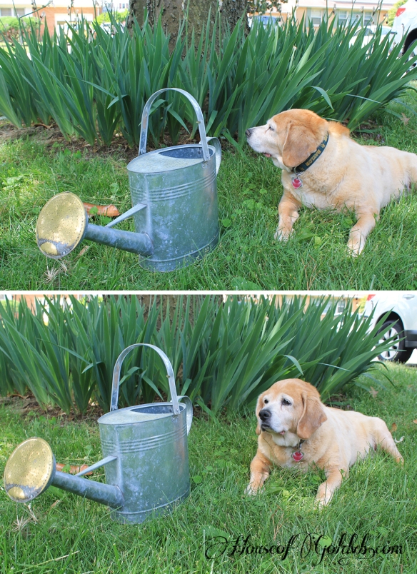 Watering Can Before_HouseofGold