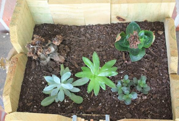 Succulent After_HouseofGold