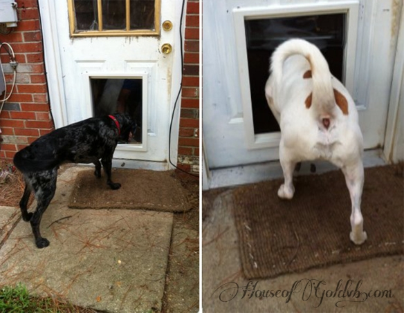 Dogs Testing_HouseofGold