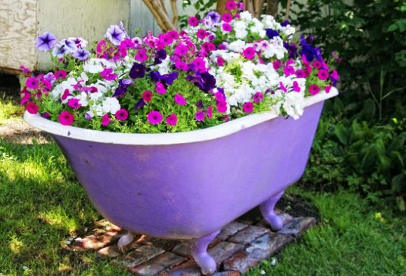 Petunias-old-bathtub